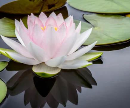 Peace of mind maintenace home inspection milwauke